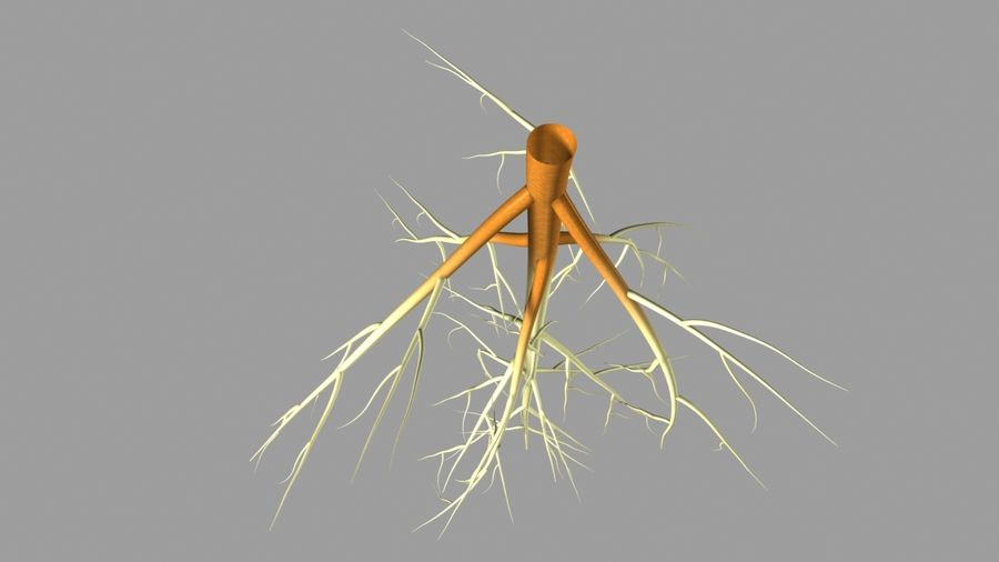 Tik op Root System royalty-free 3d model - Preview no. 3