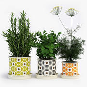 Kitchen Herbs In Orla Kiely Striped Petal Pots 3d model