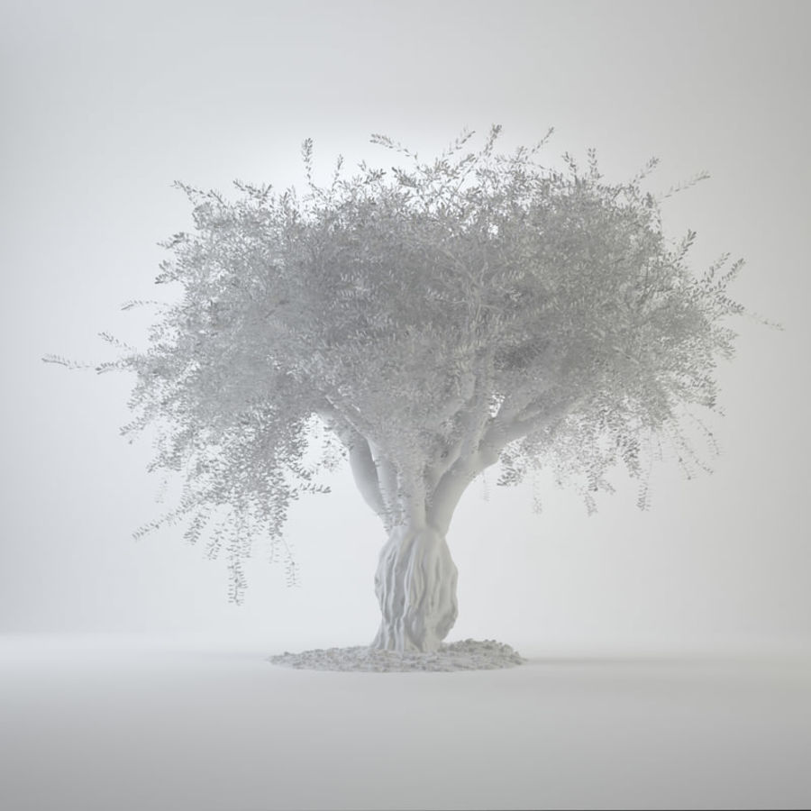 Grote sier olijfboom royalty-free 3d model - Preview no. 3