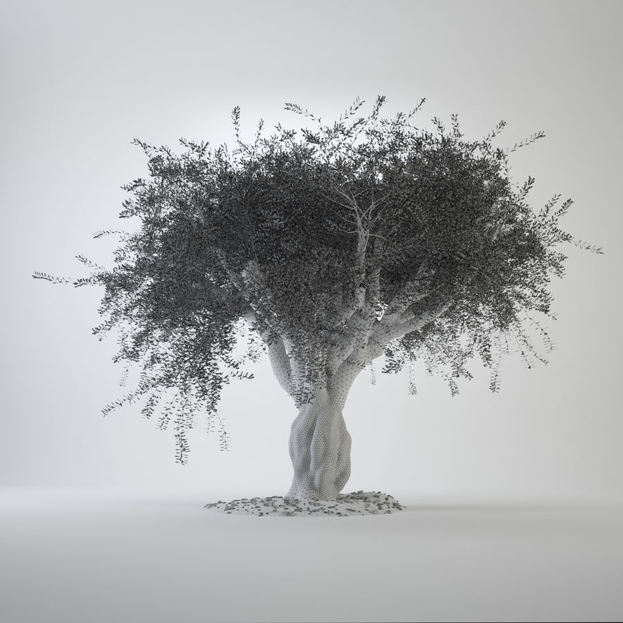 Grote sier olijfboom royalty-free 3d model - Preview no. 4