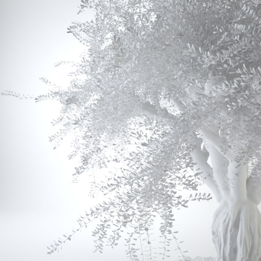 Grote sier olijfboom royalty-free 3d model - Preview no. 15