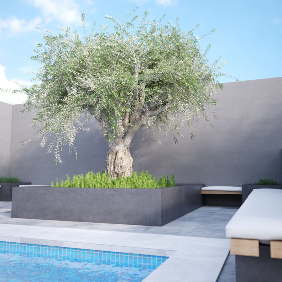 Grote sier olijfboom royalty-free 3d model - Preview no. 5
