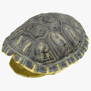 Carapace de tortue 3d model