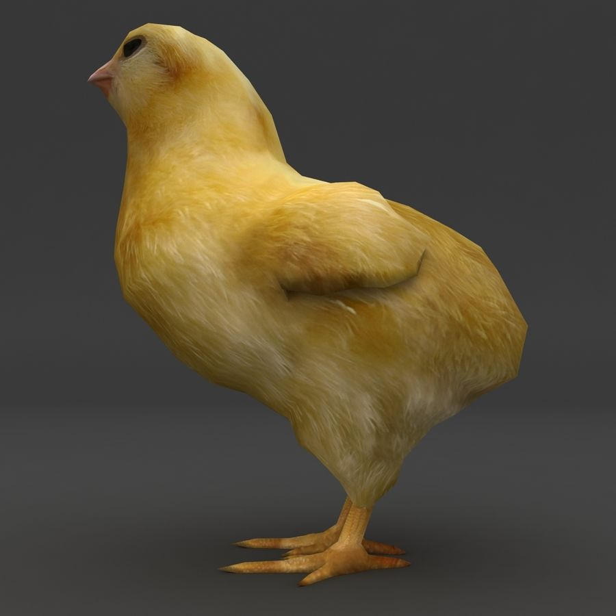 Chick  hen low poly royalty-free 3d model - Preview no. 4