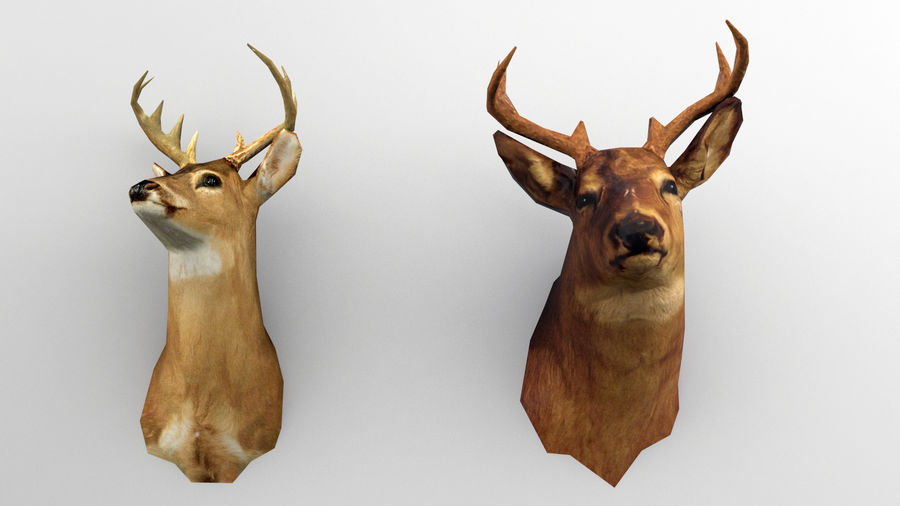 Taxidermie des cerfs (low poly) royalty-free 3d model - Preview no. 3