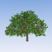 Elma Ağacı (2) 3d model