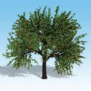 樱桃树 3d model