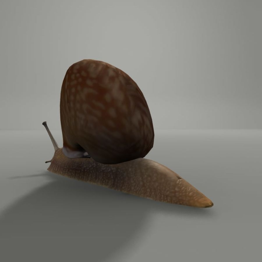 Caracol royalty-free 3d model - Preview no. 3