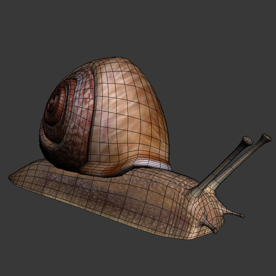 Caracol royalty-free 3d model - Preview no. 5