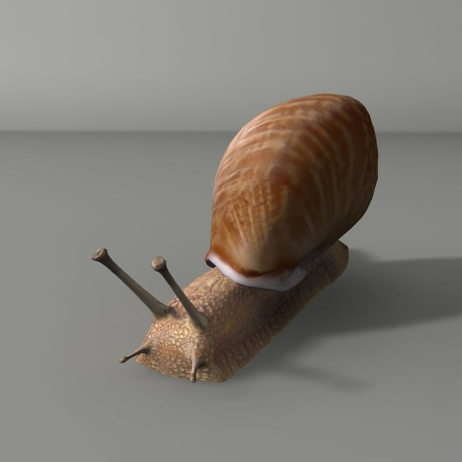 Caracol royalty-free 3d model - Preview no. 2