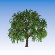 사과 나무 (3) 3d model