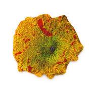 Çene kırıcı mantar mercan 3d model
