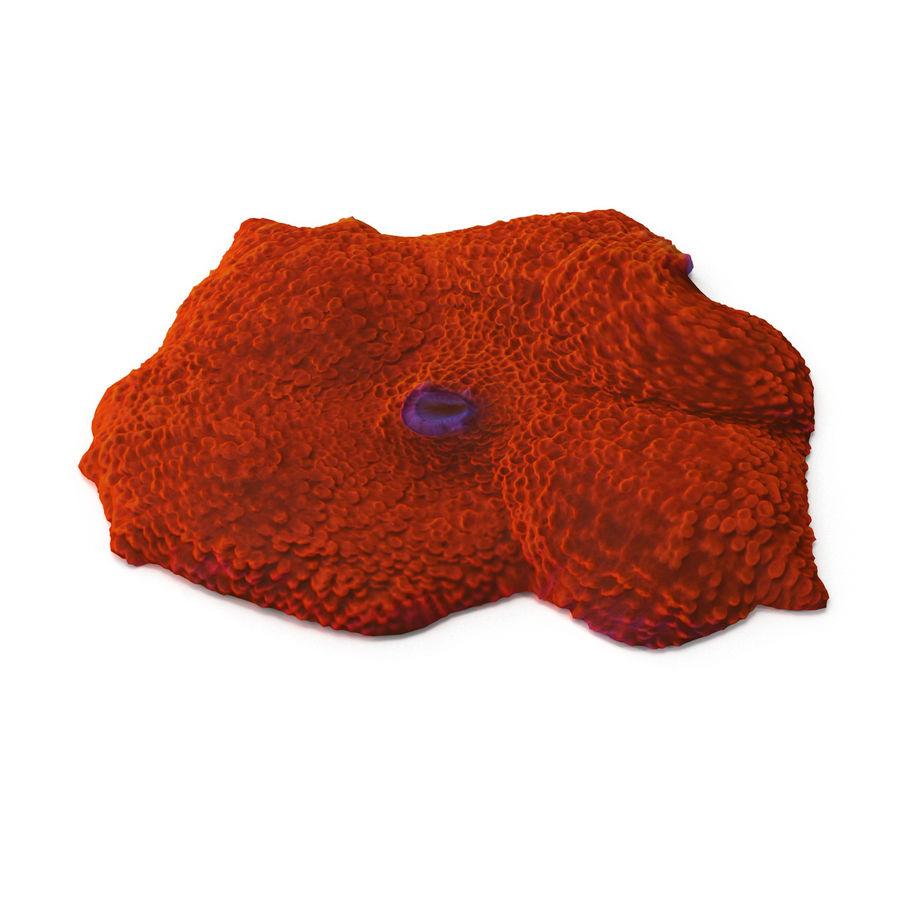Orange Discosoma Pilzkoralle royalty-free 3d model - Preview no. 3