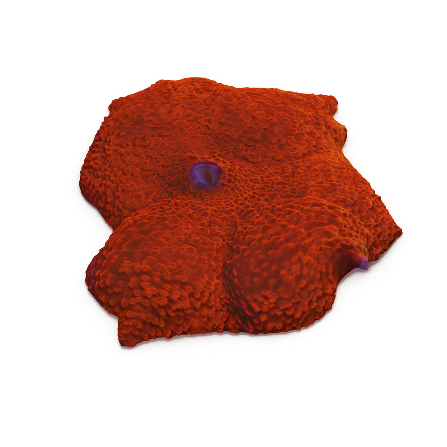 Orange Discosoma Pilzkoralle royalty-free 3d model - Preview no. 2