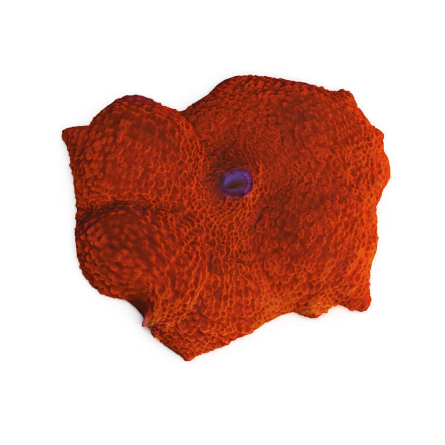 Orange Discosoma Pilzkoralle royalty-free 3d model - Preview no. 1