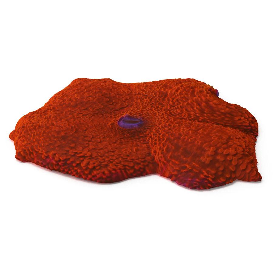 Orange Discosoma Pilzkoralle royalty-free 3d model - Preview no. 5