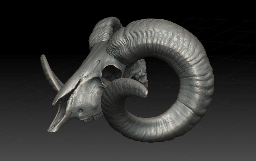 Ram Skull royalty-free 3d model - Preview no. 6