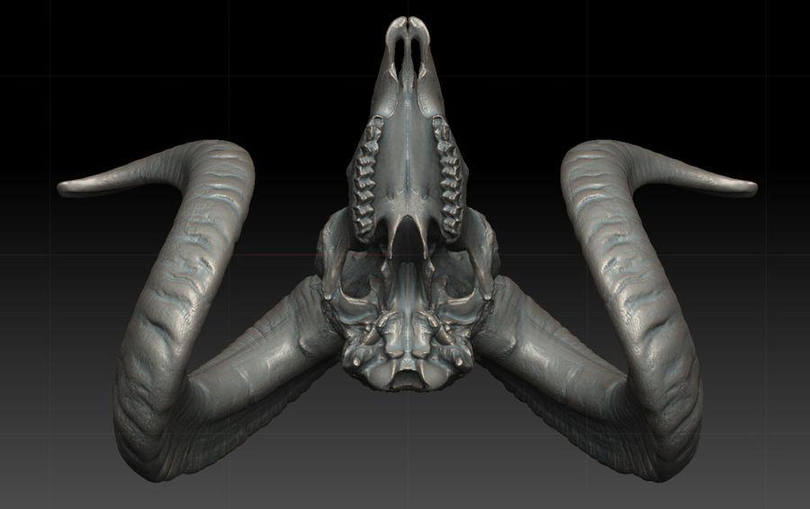 Ram Skull royalty-free 3d model - Preview no. 5