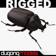 Rhinoceros Beetle 3d model