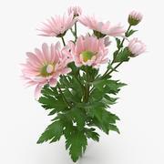 Хризантема светло-розовая 3d model
