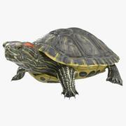 Pond Slider Turtle Pose 2 3d model