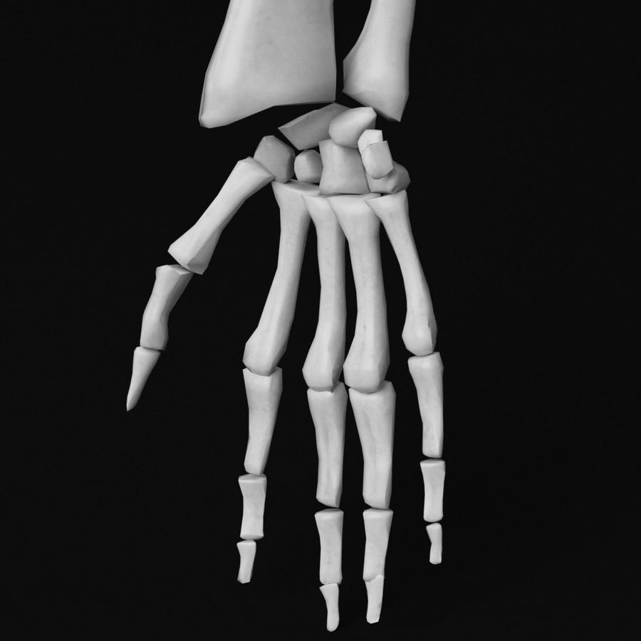 Anatomy - Hand and arm bones royalty-free 3d model - Preview no. 5