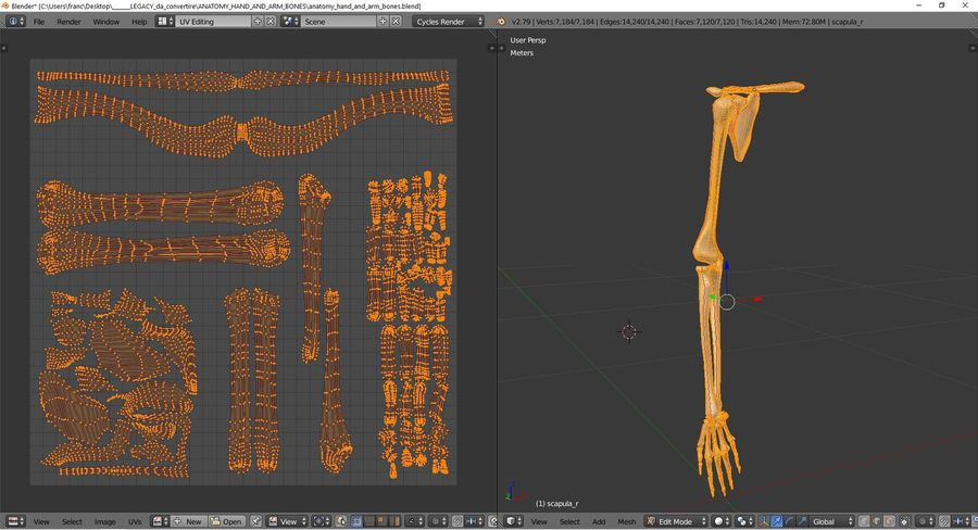 Anatomy - Hand and arm bones royalty-free 3d model - Preview no. 10