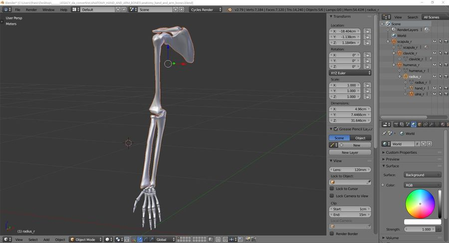 Anatomy - Hand and arm bones royalty-free 3d model - Preview no. 9
