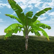 香蕉树 3d model