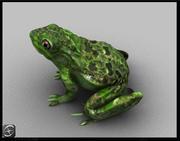 개구리 3d model