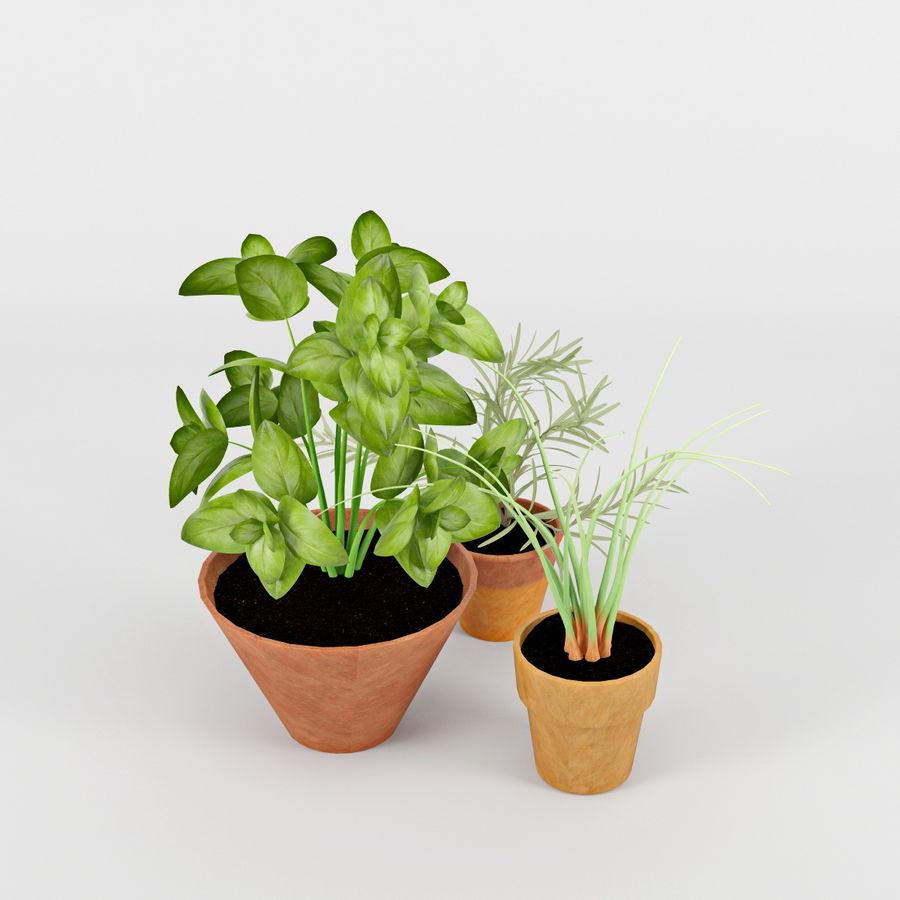 Rośliny kuchenne royalty-free 3d model - Preview no. 3
