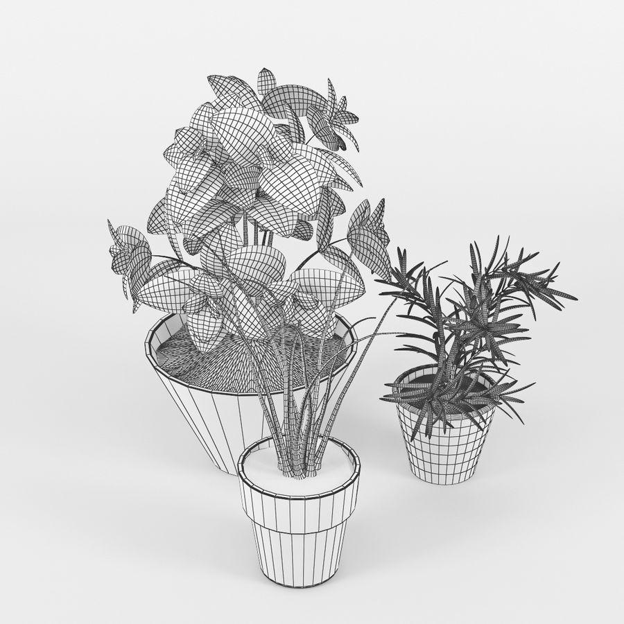Rośliny kuchenne royalty-free 3d model - Preview no. 6
