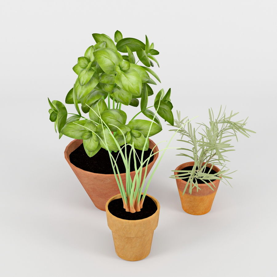 Rośliny kuchenne royalty-free 3d model - Preview no. 4