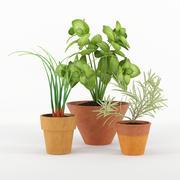 Rośliny kuchenne 3d model