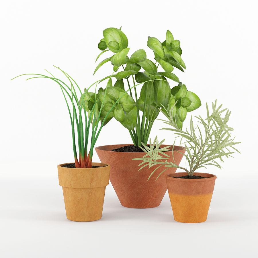 Rośliny kuchenne royalty-free 3d model - Preview no. 1