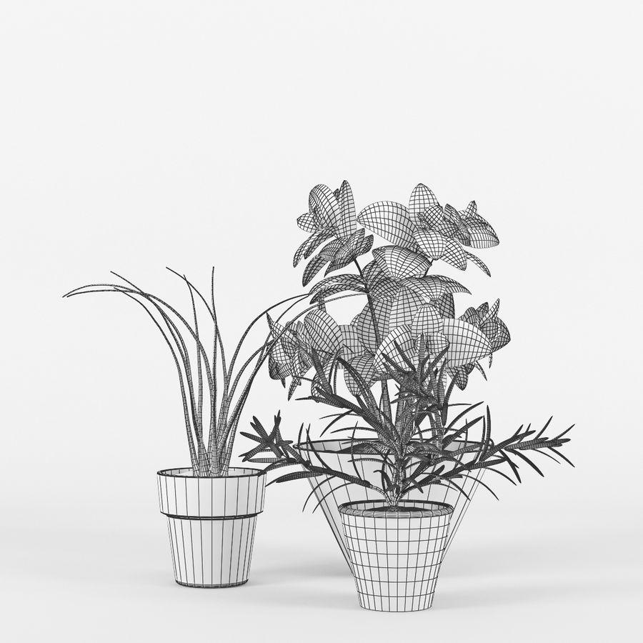 Rośliny kuchenne royalty-free 3d model - Preview no. 5