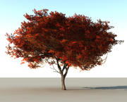 Красивое красное дерево 3d model