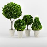 Sammlung von Pflanzen 3d model