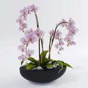 Orquídea Phalaenopsis 3d model