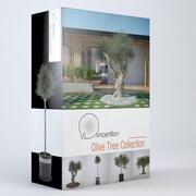Olive Tree-collectie 3d model
