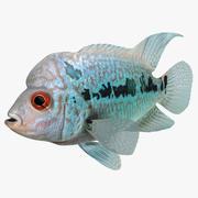 Flowerhorn fisk 3d model