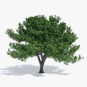 Дубовое дерево 3d model