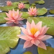 lilia woda v2 3d model