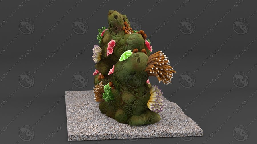 - koraalrif - opgetuigd en geanimeerd royalty-free 3d model - Preview no. 3