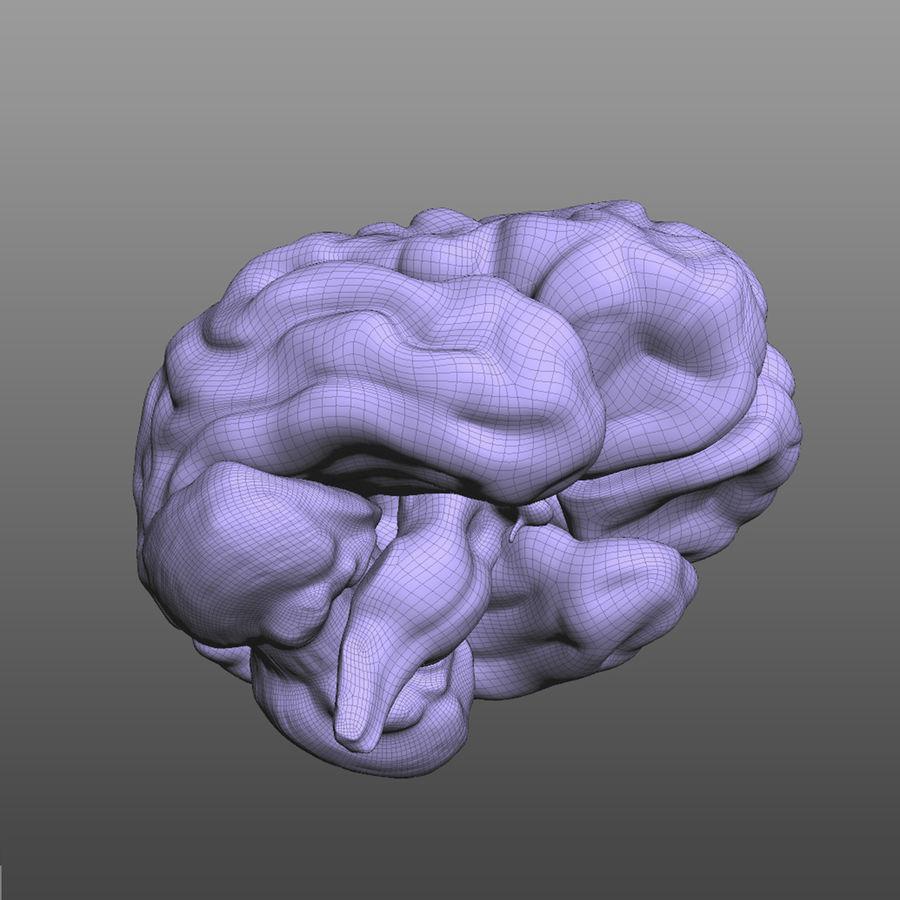 Hjärna royalty-free 3d model - Preview no. 5