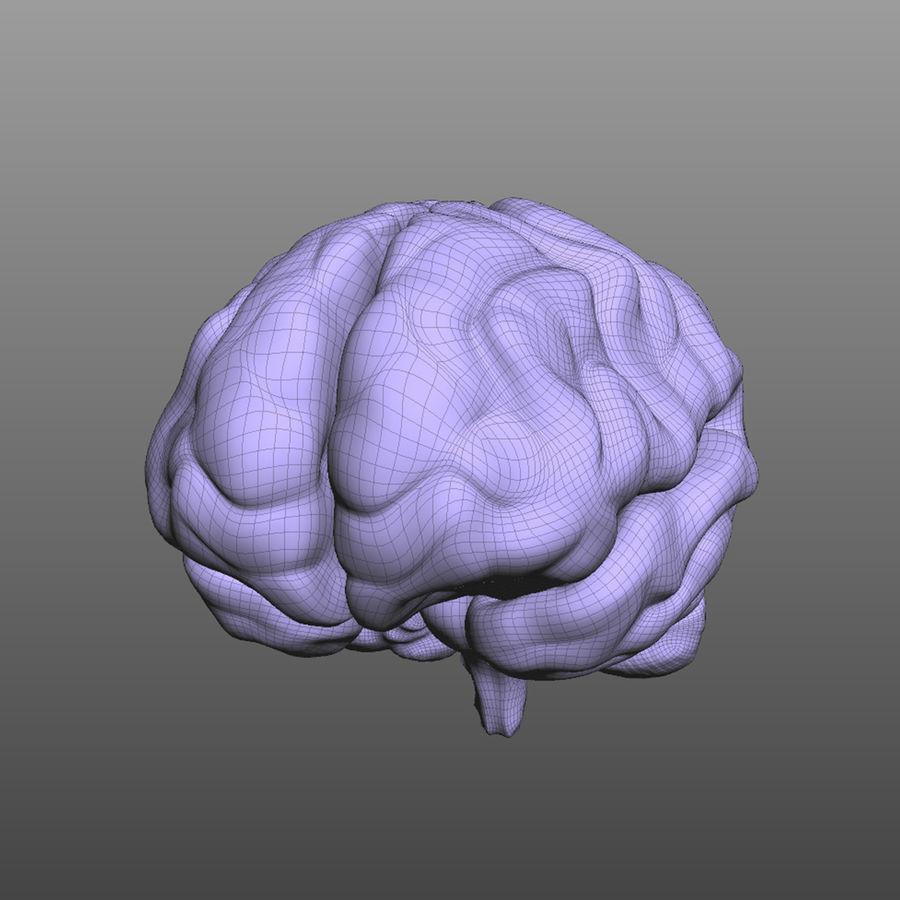 Hjärna royalty-free 3d model - Preview no. 7