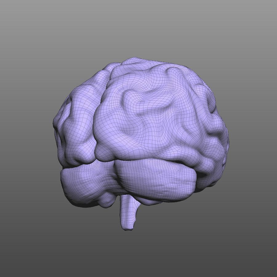 Hjärna royalty-free 3d model - Preview no. 6