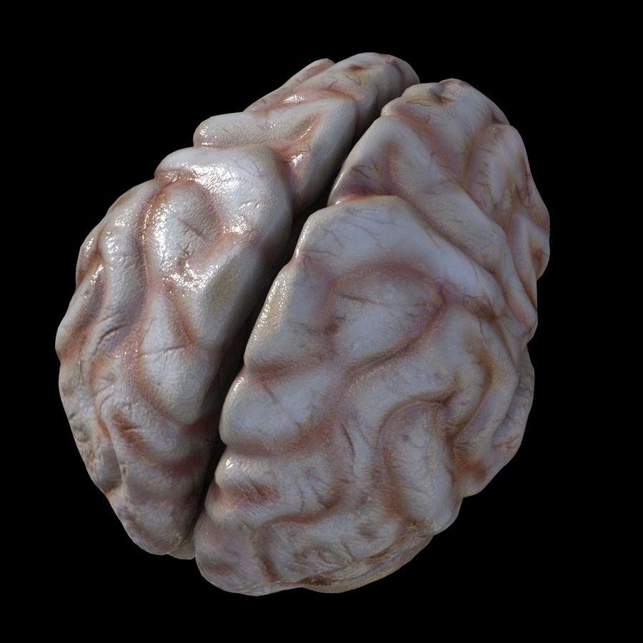 Hjärna royalty-free 3d model - Preview no. 4