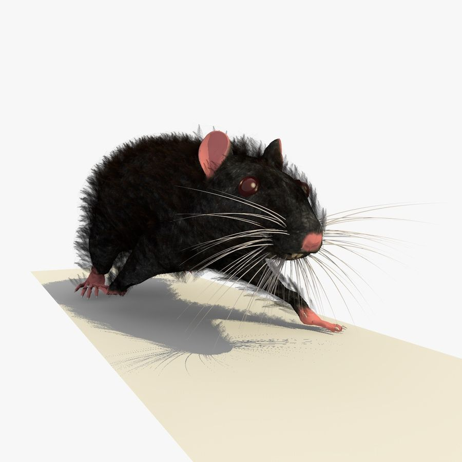 Animated Walking Black Mouse royalty-free 3d model - Preview no. 20