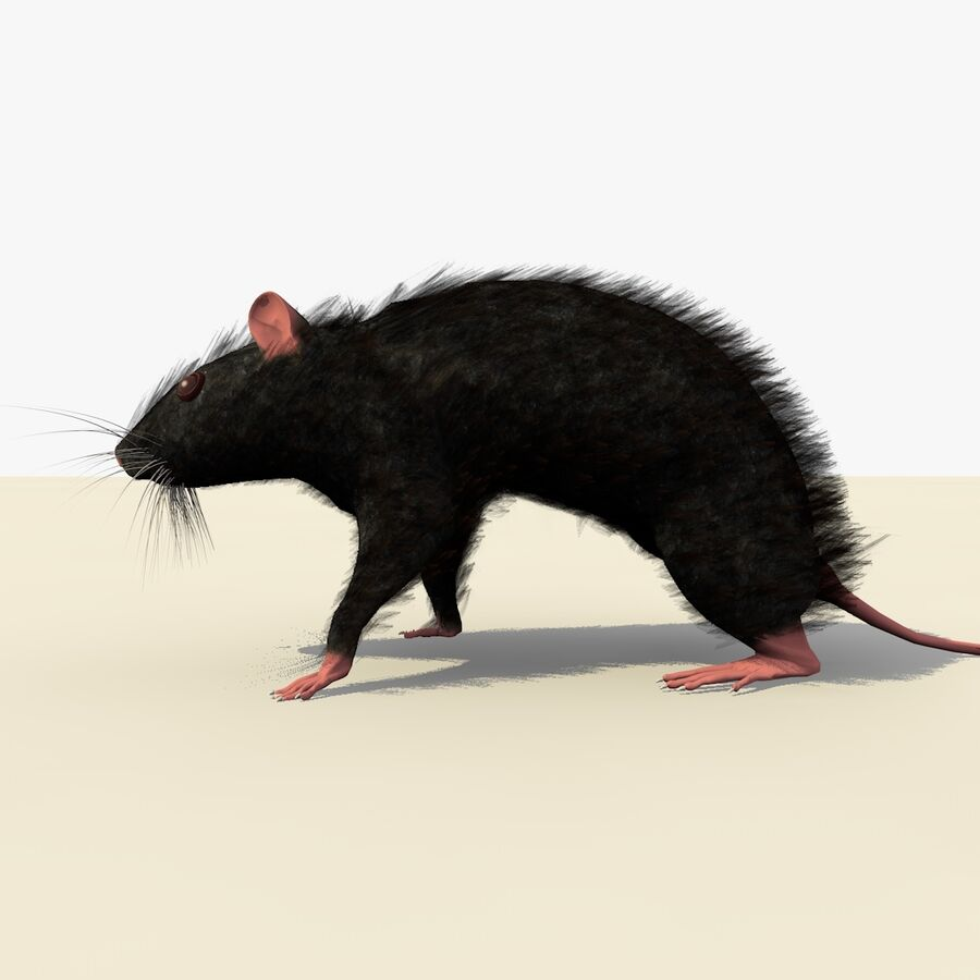 Animated Walking Black Mouse royalty-free 3d model - Preview no. 4